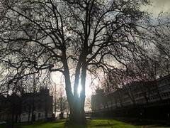 Sun through a Tree Silhouette @ St. Marys Redcliff@ Bristol (nomadic_traveller) Tags: bristol stmaryredcliff sun silhouette bristolwinter