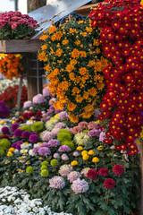 Chrysanthemen (KaAuenwasser) Tags: chrysanthemen blüten blumen pflanzen bunt zierblumen zier