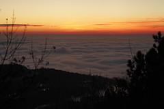 IMG_9695 (Selena & Danny) Tags: trieste canon 5dmk2 nebbia fog campi di golf samyang 85mm t15