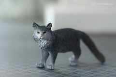 schleich maine coon - before (photos4dreams) Tags: schleich cat ooak toy plastic spielzeug plastik photos4dreams p4d photos4dreamz photo katze repaint custom oneofakind upgrade dolldesigner design mainecoon canoneos5dmark3