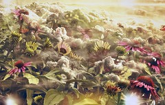 Coneflowers & Clouds-HSS! (❅❅❅Snow Coming Soon!❅❅❅) Tags: sliderssunday digitalart abstract flowers clouds photoshopcreation