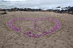 Beach Flowers (jtbradford) Tags: kauai hawaii