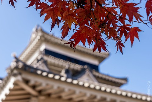 Leaves and castle