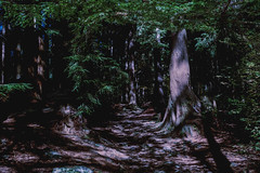 Forest - Film Leica (Photo Alan) Tags: forest film leica filmleica leicamp vancouver canada