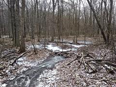 Frozen Woodland Stream (1) (neukomment) Tags: january winter 2019 seidmanpark michigan kentcountymi parks trails android