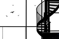 Warn the birds (Maerten Prins) Tags: nederland netherlands nijmegen dokstraat window stair stairs staircase spiralstaircase bird birds warning stickers graphic blackandwhite lines curves minimal minimalism