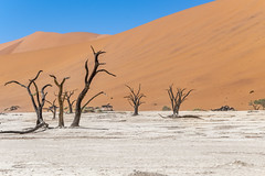 _RJS4638 (rjsnyc2) Tags: 2019 africa d850 desert dunes landscape namibia nikon outdoors photography remoteyear richardsilver richardsilverphoto safari sand sanddune travel travelphotographer animal camping nature tent trees wildlife