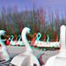 Zwanen Plaswijckpark Rotterdam 3D