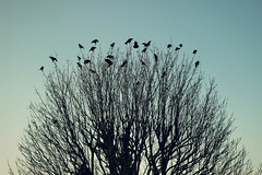 perched (Rabiah-M) Tags: 50mmlens canon600d birds nature tree