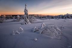Il et temps de rentrer (Manonlemagnion) Tags: paysage nature hiver froid neige montagne sapin givré lumière sunrise leverdusoleil nikond810 1635mmf4