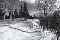 The Drift (Tony Hochstetler) Tags: nikon nikon1424mmf28 d850 rockymountainnationalpark rmnp nationalpark colorado finchlake winter snow drift pine aspen trees sky clouds landscape horizontal monotone bw blackandwhite wideangle