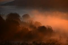 DSC_2428 (griecocathy) Tags: paysage brume végétations arbre rayon gris crème rose oranger brun sombre lumineux