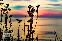 Sunset (stardusttphotography) Tags: bigsur sunset oceansunset campfire smoke atmosphere beautifulsunset silhouette flower flowers