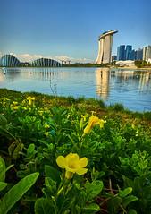Singapore Skyline (Tom Helleboe) Tags: