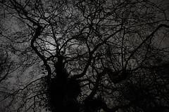Monster Of Battersea (Coquine!) Tags: christianleyk london unitedkingdom england greatbritain batterseapark park night nacht battersea wandsworth tree baum silhouette efeu ivy spooky scary