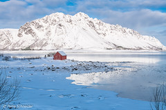 Lofoten islands with a lot of snow. (Petra S photography) Tags: lofoten lofotenislands snow winterday winter winterwonderland redshed redhut norge nordnorwegen nordland norway northernnorway