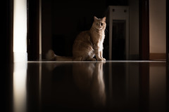 Cats move in memory darkness (davidcasanova1994) Tags: cat color light animal house brown sun shadow gato sombras luces nikkor nikon d610 50mm 18g