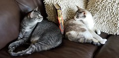 My cats make good bookends...😺 (NicestGuyEver) Tags: cats kitty feline funny