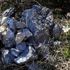 L'âme du cairn (RarOiseau) Tags: alpesdehauteprovence pierre fleur lamotteducaire montagne