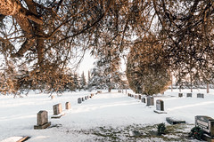 Vancouver-Winter-Walks-27 (_futurelandscapes_) Tags: vancouver winter snow cold february mountainview cemetery trees arboretum sunset evening graves sunny blue white vintage