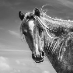 Out there... (Einir Wyn Leigh) Tags: horse pony feral outside rugged blackandwhite rural animal beauty love wales