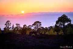 "Teneriffe - Sunset on Lava Field (Ineound) Tags: spiegel spiegelblick teneriffa blick spiegelblickde ""spiegelblickde"" landscape landschaft natur nature sunset sonnenuntergang dawn sonne sun fujifilm fuji xpro xpro2 rangefinder erf fujinon xf 3548 55200 mm r lm ois f3548 55200mm tele 50200mmf3548"