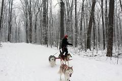 IMG_0055_AutoColor (LifeIsForEnjoying) Tags: snow mushing dog sledding dogs snowboard sled sitka nike kaskae
