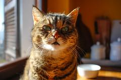 Vabbe'... (Chiaro Chiari) Tags: cat gatto animals animali animal animale eyes occhi luce light felino pets domestici