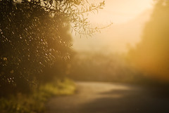 Orange light (jimiliop) Tags: light orange fields olivetrees lemontrees road afternoon nature blurry leaves branches trees hazy