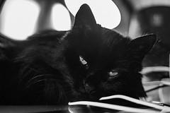 20190318 Lakrits sover på Wacom platta (Sina Farhat) Tags: lakrits hemma home katt cat sleeping sover blackandwhite svartvit monochrome office kontor wacom göteborg gothenburg sweden sverige 031 mobile raw canon7d canon50mm14usm lightroomclassiccc