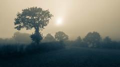 Foggy autumn sun (kristianpurrucker) Tags: travental traventhal schleswigholstein deutschland de foggy autumn sun herbst sonne feld baum nebel