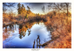 Nashua River (Pearce Levrais Photography) Tags: canon hdr landscape water river reflection tree plant trees forest sky cloud trunk wood outside outdoor nature explore nh newhampshire