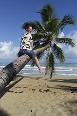 ¡Arriba palmera! (ben.bourdon) Tags: república dominicana samaná las terrenas cielo nubes azul playa caribe palmera
