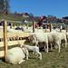 2019-03-29 03-31 Südtirol-Trentino 142 Ritten, Klobenstein