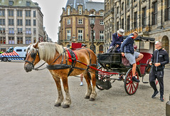 Horse & Carriage ,Dam-Square (Rick & Bart) Tags: amsterdam mokum holland thenetherlands city urban rickvink rickbart canon eos70d carriage coach dam horse everydaypeople people strangers candid