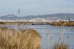 Llobregat (klaudia_2018) Tags: deltadelllobregat