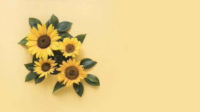 Обои подсолнухи, желтый, фон, yellow, beautiful, sunflowers картинки на рабочий стол, раздел цветы - скачать