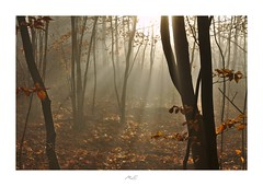 Magic of Autumn (Max Angelsburger) Tags: beech forest mist tyndall light rays beams magic leafs brown tree trunks fallen leaf soft morning fog background carpet autumn colors golden leuchtend glowing badenwürttemberg herbst 2018 igworldglobalilovenatureigdivineshotsearthofficialearthshotzmarvelshotstheworldshotzdiscoverglobelandscapeloverlandscapehunter