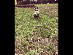Ball same size as me no problem im strong girl - Cute Dog (tipiboogor1984) Tags: aww cute cat funny dog youtube