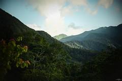 Chaîne des monts de Basse-Terre (TristanLohengrin) Tags: ciel sky forêt forest paysage landscape arbre tree montagne mountain flanc bois woods nikon d5300 natural nature light