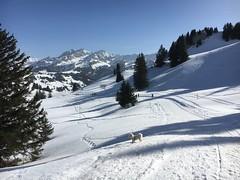IMG_3079 (Annelise LE BIAN) Tags: naïs neige montagne suisse chien bichonfrisé