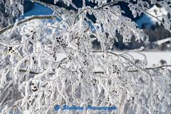 Lac Noir, brina... (Stefano Procenzano) Tags: schwarzsee fr svizzera ch lacnoir lac lake lago cantonfribourg nikon nikkor d750 nikond750 nikkor80200mmf28edaf 80200mm f28 80200mmf28 kenko14x kenkotelepluspro300dgx14x polarizer polarizzatore 80200mmf28af