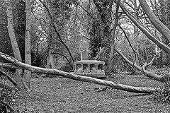 General Cemetery  Monochrome (brianarchie65) Tags: generalcemetery cemeteries headstones graves grave hull monochrome geotagged brianarchie65 springbankwest kingstonuponhull cityofculture trees ivy bushes blackandwhite blackandwhitephotos blackandwhitephoto blackandwhitephotography blackwhite123 blackwhiterealms unlimitedphotos ngc flickrunofficial flickr flickruk flickrcentral flickrinternational ukflickr paths undergrowth