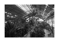 Atocha Train Station IX (BLANCA GOMEZ) Tags: spain mad madrid bw blackwhite tren train railwaystation trainstation estaciondetren atocha atochatrainstation arquitectura architecture interior interiorplaza plaza flowers plants trees pond water greenhouse ceiling roof glass iron oldstaion silhouettes light shadows textures patterns shapes