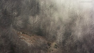 Winter in the beech forest.