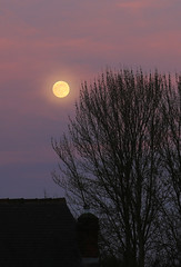 Spring Equinox (zeity121) Tags: moon lunar astronomy astrophotography trees sky