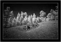 Abandoned, Puntagorda, Islas Canarias (Bartonio) Tags: sonya7rir lapalma laowa1018mm45 laowa infrared islascanarias ir infraroja abandoned canaryislands modified monochrome bw blanconegro