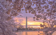 Good morning D.C (brian.swogger) Tags: washington spring dc america usa cherry american us reflection landmark monument states memorial united pink basin tidal tourism blossom travel season flowers historic jefferson flower lake tree district sakura columbia trees colorful symbol nature blossoms april thomas water festival springtime color tower river national skyline day washingtondc city politics potomac tidalbasin foliage bloom cherryblossoms sunrise japanese