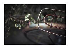蔦と錆びた自転車 (gol-G) Tags: fujifilm xpro2 fujifilmxpro2 nokton 35mm f12 voigtlandernokton35mmf12aspherical digital color japan kobe