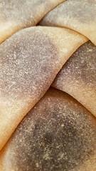 Delicious Snack (Bracus Triticum) Tags: delicious snack food 12月 december winter 2018 平成30年 じゅうにがつ 十二月 jūnigatsu 師走 shiwasu priestsrun calgary カルガリー アルバータ州 alberta canada カナダ